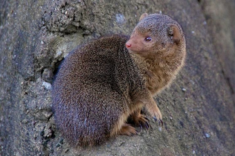Close-Up Of Mongoose Sitting On Tree