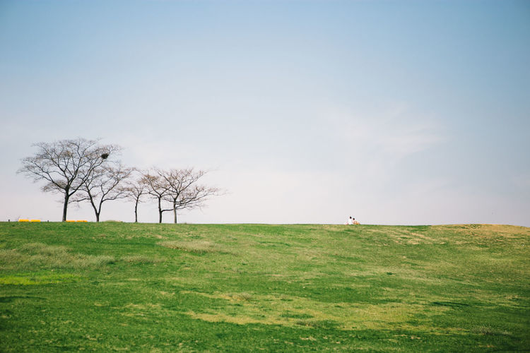 Korea Photos Seoul, Korea Beauty In Nature Clear Sky Copy Space Day Environment Field Grass Green Color Horizon Horizon Over Land Korea Trip Land Landscape Nature Non-urban Scene Olympic Park Seoul Outdoors Plant Scenics - Nature Sky Tranquil Scene Tranquility Tree