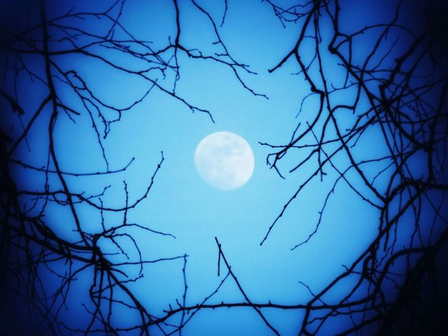 Scenics Tranquil Scene Beauty In Nature Tranquility Moon Low Angle View Blue Nature Clear Sky Branch Full Moon Idyllic Bare Tree Silhouette Sky Majestic Planetary Moon Dark Outdoors Non-urban Scene