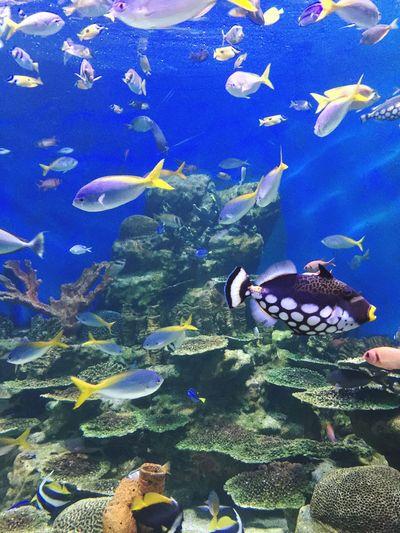 Fishes Aquarium Swimming