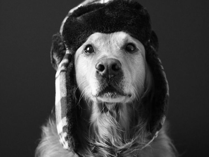 Close-up of dog wearing cap