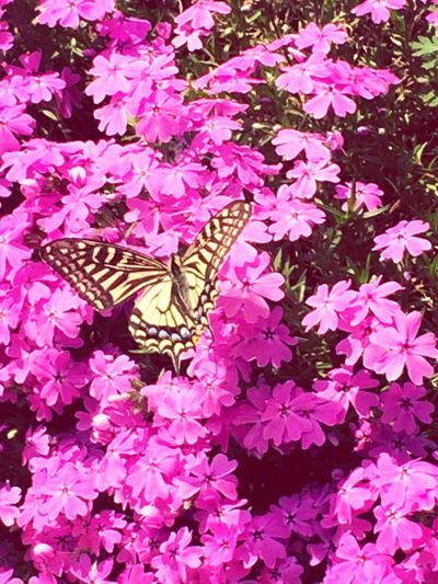 Butterfly~^^ Good Things Come In Small Packages With Lightcase