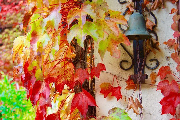 Art Autumn Leaves Beautiful Bell Colorful Hanging Happy Happyheart Nature Tuscany Tuscany Countryside Villamichaela Wall