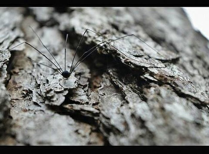 Newuser  NewinEyeEm  Happiness Sipider Trees Photography Blackspider Arañas Insects  Insect Photography