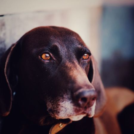 the eyes tell everything Kurzhaar Eye Dogs Bestfriend Lovedog Pets Portrait Dog Looking At Camera Close-up