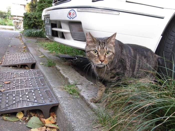 Stray Cat Cat Animals EyeEm Nature Lover