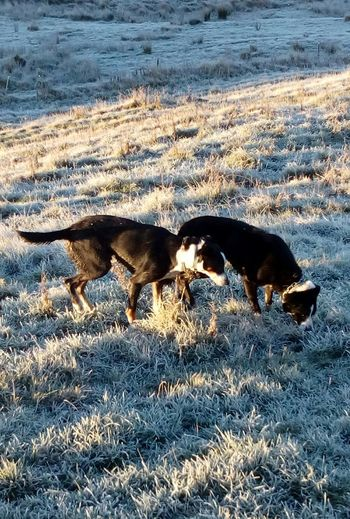 Dogs Doglife Dog Life Pets Omakere, Hawkes' Bay New Zealand Domestic Animals Rural_living Farm Animal Farmlife Ruralphotography Farmanimals Animal Themes