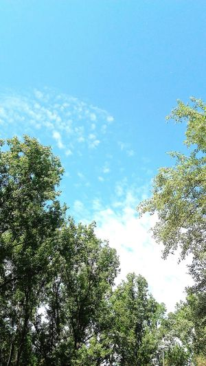 Enhanced Sky Sky And Clouds Colors Eyeemphotography Blue EyeEm Gallery Green Leaves Trees Forest Sun Blue Sky Skyporn Blueporn Greenporn