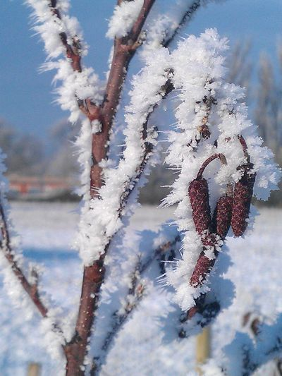 Beauty In Nature Close-up Cold Cold Temperature Covering Day Focus On Foreground Frost Frozen Growth Ice Nature No People Outdoors Plant Season  Selective Focus Sky Snow Stem Tranquility Tree Trunk Twig Weather Winter