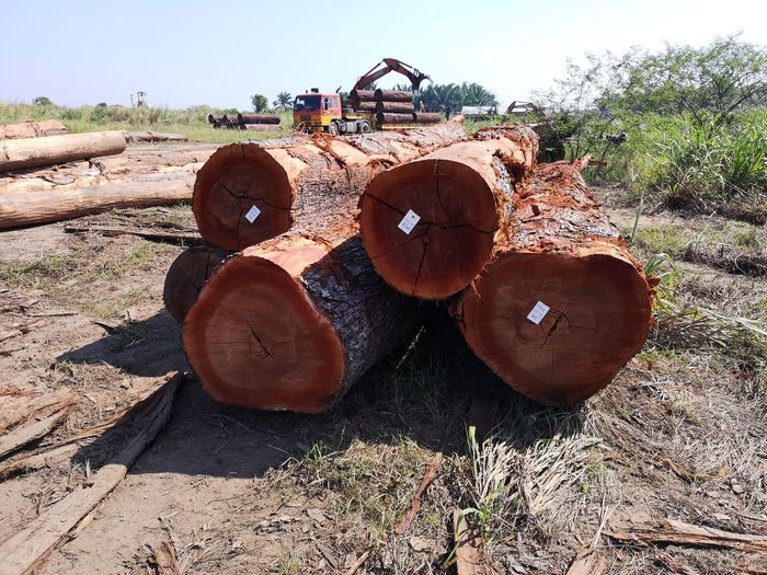 Close-up of logs on field