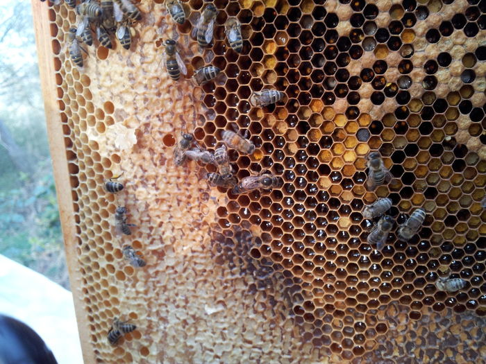 Here's a riddle for you. Find the queen bee! Bees Riddle Hi! Relaxing