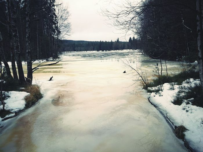 Czech Republic Czech Pfad Lost in the Landscape Nature Nature Photography Forrest Photography Hot Spring Frozen Lake Deep Snow Weather Condition Frozen Ice Foggy
