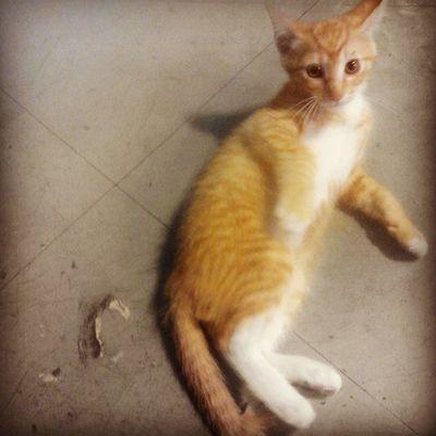 어서오라냥! ㅋㅋ 일상 Cat 고냥이 고양이