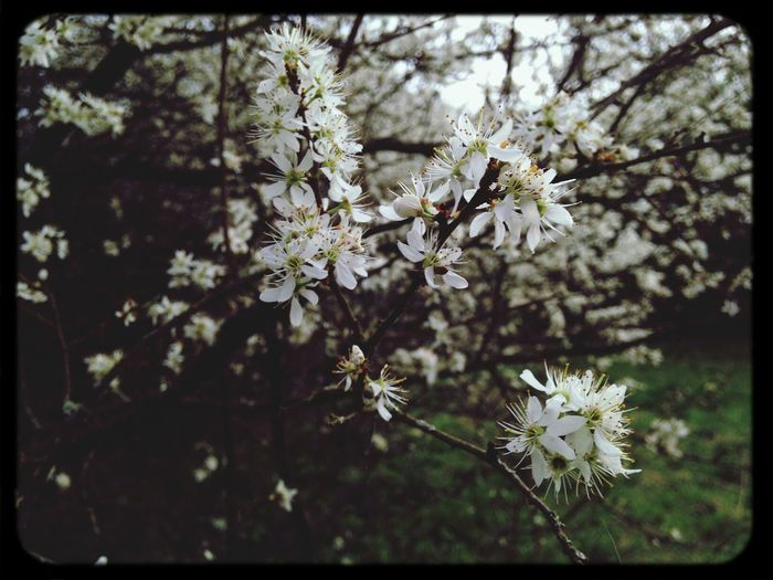 Spring Blossoms  Nature Leonie Filter