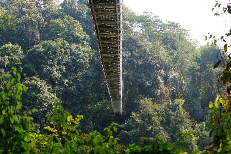 bridge to canolly's plot, Asia's oldest teak plantations Tree Forest Leaf Sky Close-up Green Color Plant Go Higher