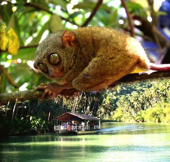 Check This Out Taking Photos Tarsier Climbing In A Tree Boat Nature Photography Natural Beauty Naturelovers Bohol Philippines Bohol Escaped Boholmoments