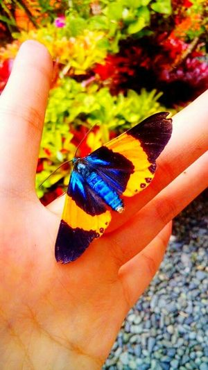 Butterfly Garden Gardening Green Colorful Gardencreatures