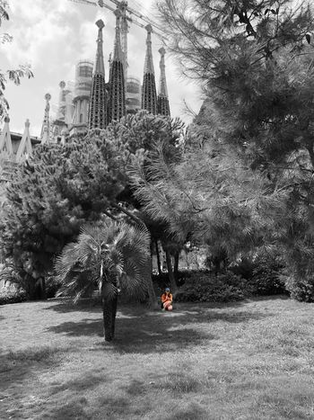 Sagrada Familia Iphonephotography IPhoneography Iphoneonly Eye4photography  EyeEm Gallery Colorsplash Colorsplash_theworld Architecture_collection Sagrada Familia Gaudì Architecture Work Gaudi Streetphotography Tree Architecture Built Structure Building Exterior Plant City Nature Building Park