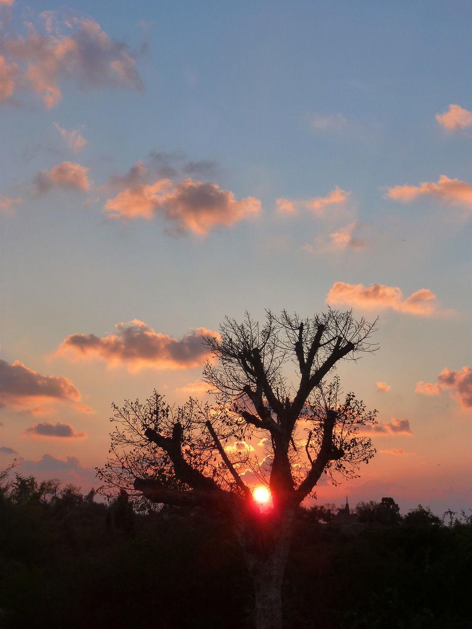 SILHOUETTE BARE TREE AGAINST SUNSET