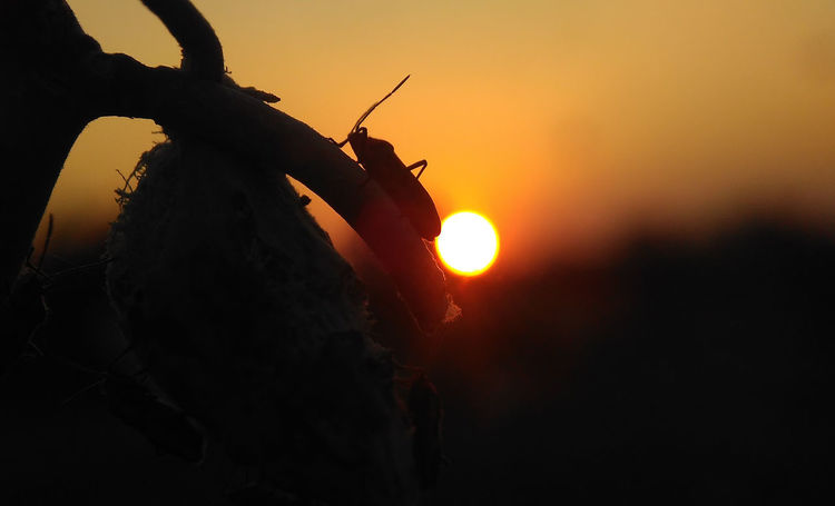 Nature Sunset and Silhouette Insect Macro Beauty Macro Insects Macro Photography Nature Nature Photography Nature Sunset Nature Sunset Beauty Beauty In Nature Close-up Day Macro Insect  Macro Nature Macro_collection Men Nature One Person Orange Color Outdoors People Real People Silhouette Sky Sun Sunlight Sunset