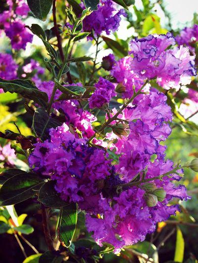 Morning Flowers Purple Sabah Sabah ;)