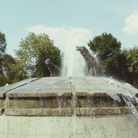 En un parque al sur, un lugar que aún no me dicen... Parques  Domingodeganarseguidores