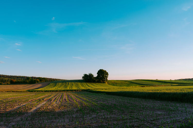 Landscape Field Sky Land Environment Tranquil Scene Tranquility Beauty In Nature Scenics - Nature Plant Agriculture Growth Rural Scene Nature No People Farm Idyllic Tree Green Color Day Outdoors Plantation Sony A7r Poland Polska