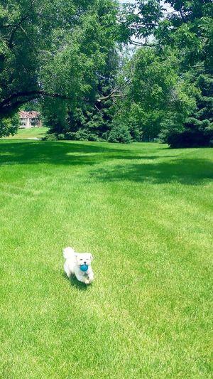 Hanging Out Taking Photos Hi! Enjoying Life Dog Love Randomness Dog Playing Fetch