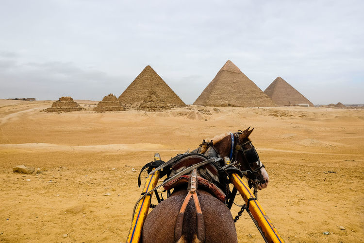 Horse stood on sand in front of pyramids of giza