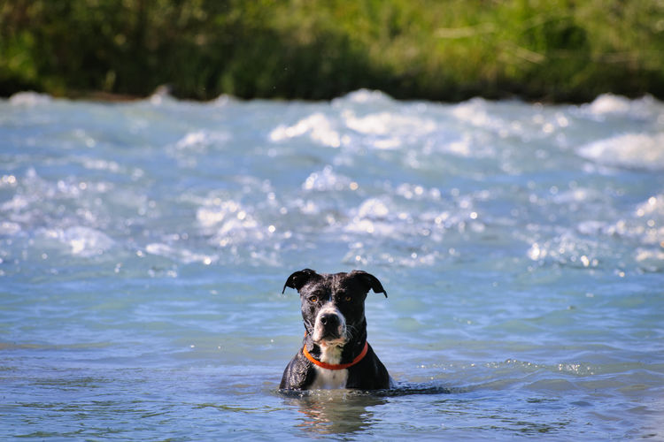 Portrait of dog in sea