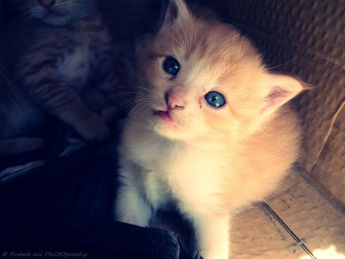 There are no seven wonders of the world in the eyes of a child. There are seven million. -Walt Streightiff Cats