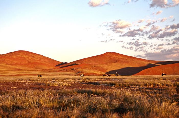 Nature Landscape Beauty In Nature Grass Sky No People Mountain Ostrich Namib Desert Namibia Namib Dunes Dunes Red Sand Wildlife Animals In The Wild Wildlife Photography Wildlife & Nature EyeEm Nature Lover Beautiful Nature Eye4photography  Beauty In Nature Animal Themes Nature Sand Dune Desert
