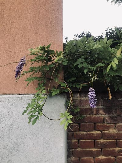 Potted plant against wall of building