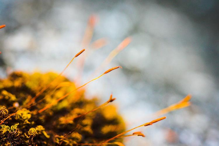 life Life Tree Flower Wildflower Wildlife EyeEmNewHere EyeEm Best Shots EyeEm Nature Lover EyeEm Selects EyeEm Gallery Eye4photography  EyeEm EyeEmBestPics EyeEm Best Edits Eyeem Market Flower Close-up Plant