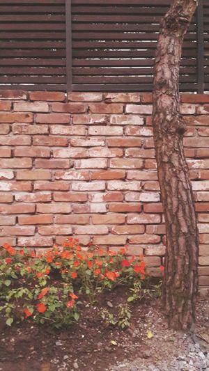 붉거나 혹은 더 붉거나 On The Wall Flowers Red Cute Cosy Place
