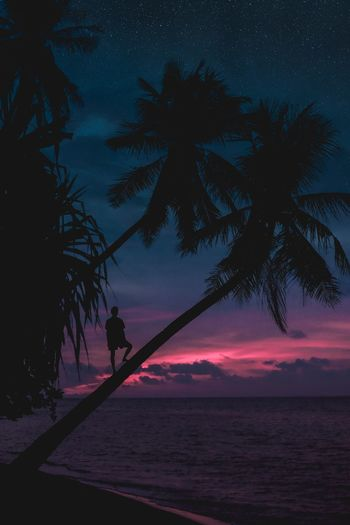 Silhouette person on palm tree at beach against sky during sunset