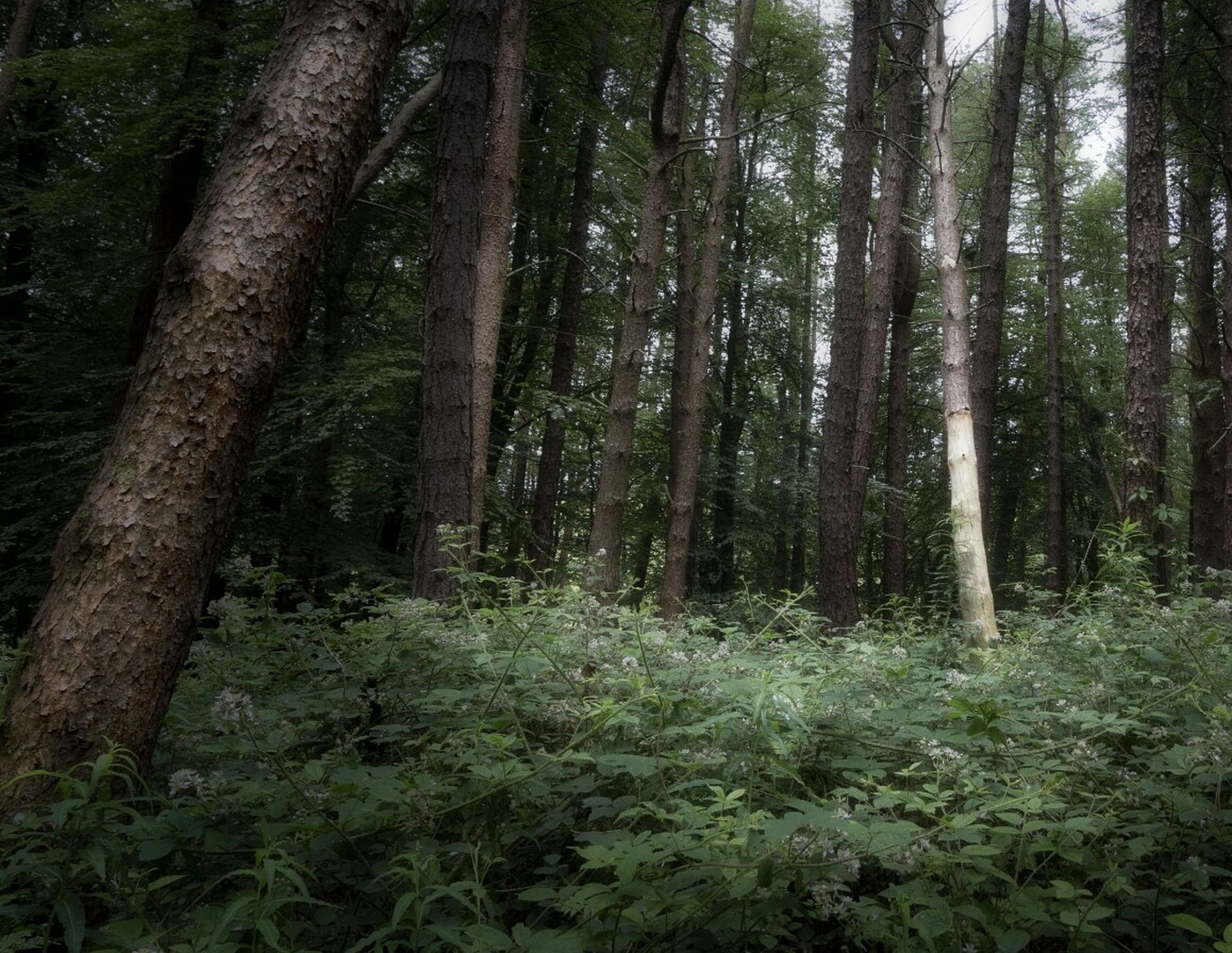 forest, plant, land, tree, trunk, tree trunk, woodland, growth, nature, tranquility, no people, beauty in nature, day, green color, scenics - nature, tranquil scene, outdoors, non-urban scene, environment, plant part, rainforest