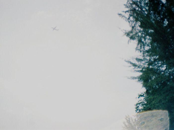 La Sardina 35mm Agfavista400 Singapore Analog Analogue Photography Analog Camera Analogue Love Analogue Vibes Film Camera Film Photography Filmisnotdead Keep Film Alive Nature Lover Nature Photography Wide Angle Street Photography The Great Outdoors - 2016 EyeEm Awards The Street Photographer - 2016 EyeEm Awards Aeroplane In The Sky
