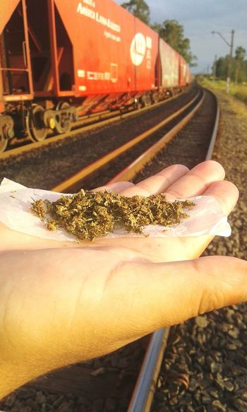 Erva Canabis Sativa Trem Relaxing Green Pace Love ♥