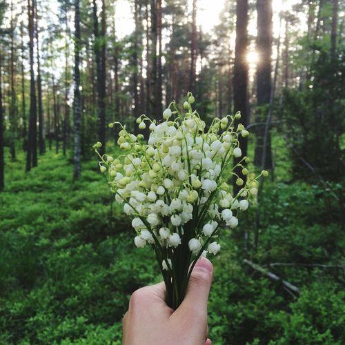 Sweden Eskilstuna Forest Color Palette Color Palette My Best Photo