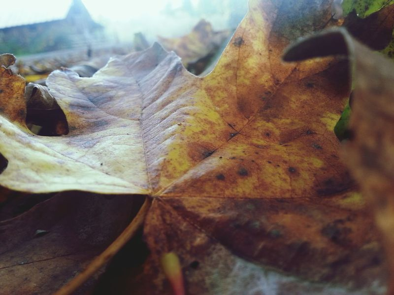 Fall is the heart of everything♡ Fall