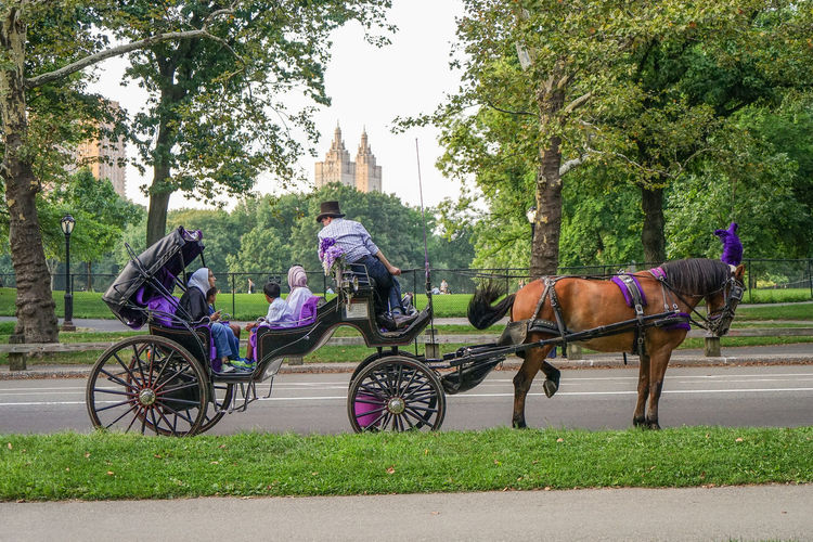 Central Park Carriage Domestic Animals Grass Horse Horse Cart Horsedrawn Mammal Mode Of Transport Nature One Animal People Riding Sky Transportation Tree Working Animal