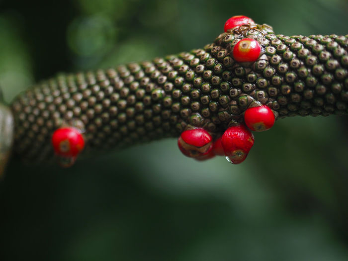Closeup of rainforest plant texture with red seed detail. selected focus.