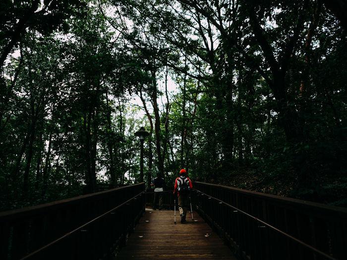 Rear view of woman walking on footbridge in forest