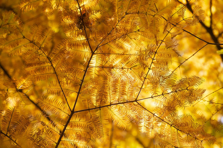 Translucent leaves Plant Tree Growth Yellow Nature Branch Autumn Leaf Change Translucent Transparent Fall Foliage Glow Sunlight Pattern