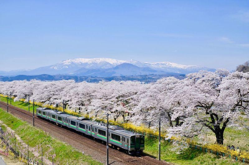 Train Mountain Cherry Blossoms Cherryblossoms Sakura Train Mountain Sky Nature Day Beauty In Nature Land No People Transportation