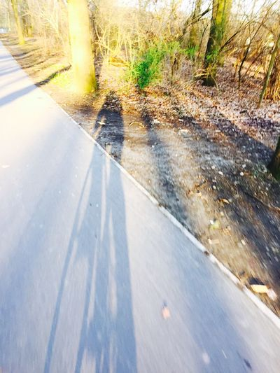 Sunlight Cycling