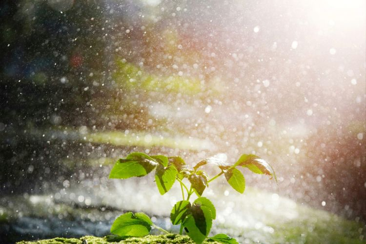 Small of tree with bokeh from raindrop background and the light from the sun,symbolism in freshy