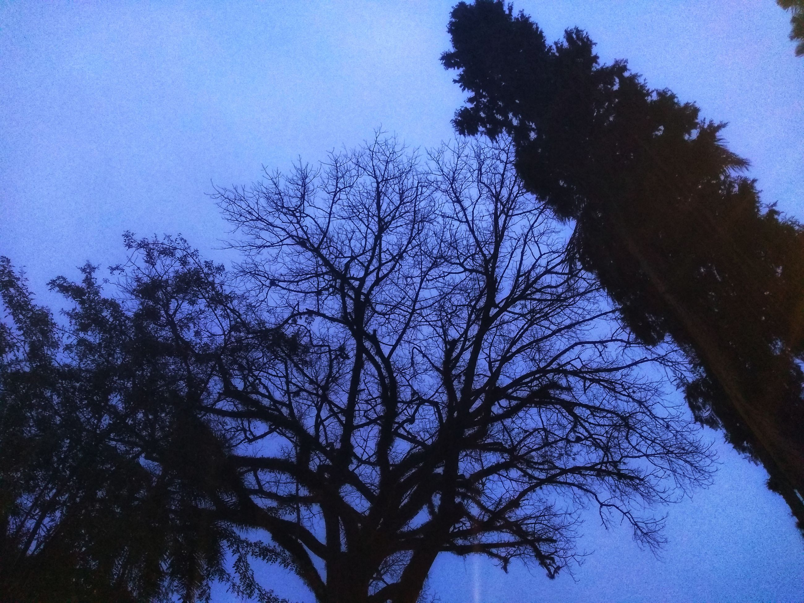tree, plant, sky, branch, bare tree, low angle view, silhouette, nature, no people, tranquility, beauty in nature, outdoors, growth, clear sky, scenics - nature, tranquil scene, dusk, night, blue, tree canopy