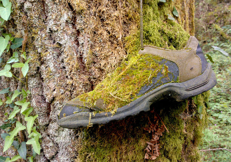 Camino De Santiago Close-up Ant Forest Grass Green Green Color Growth Lush Foliage Nature No People Non Urban Scene Non-urban Scene Outdoors Plant Scenics The Great Outdoors With Adobe Tree Tree Trunk Walking Boot Footwear Moss Moss Covered Tree Lichen